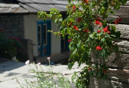 04-Red-flowers-on-the-side-of-Kinja